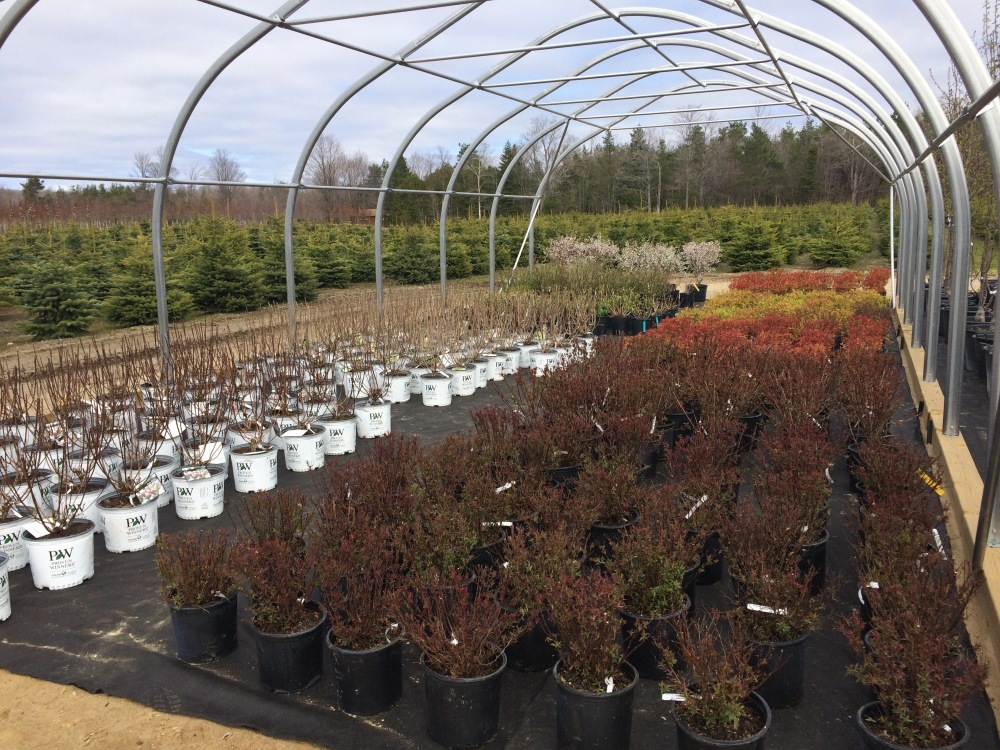 We have lots of shrubs to choose from!