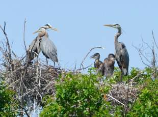 Birding the Fishing Islands
